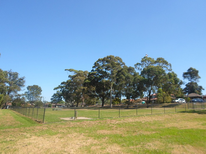 asquith park, asquith dog park, asquith oval, asquith playground, asquith park