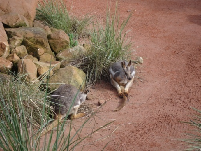 australian reptile park, central coast, sydney, wallabies, school holidays, kids