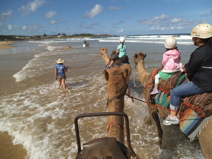 camel ride, coffs coast camels, oakfield ranch camel rides, lighthouse beach, camel, school holiday activities