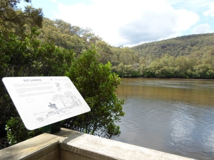 crosslands reserve saltmarsh boardwalk viewing platform berowra creek