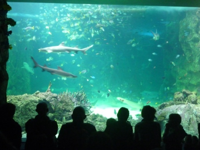 sea life, sydney aquarium, great barrier reef, daring harbour, reef theatre