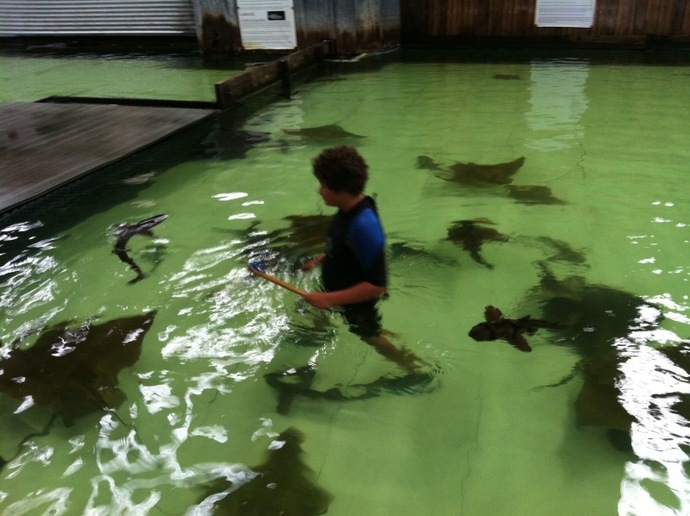 Shark and ray centre, sharks, stingrays, children, adventure, animals, feed sharks, feed stingrays