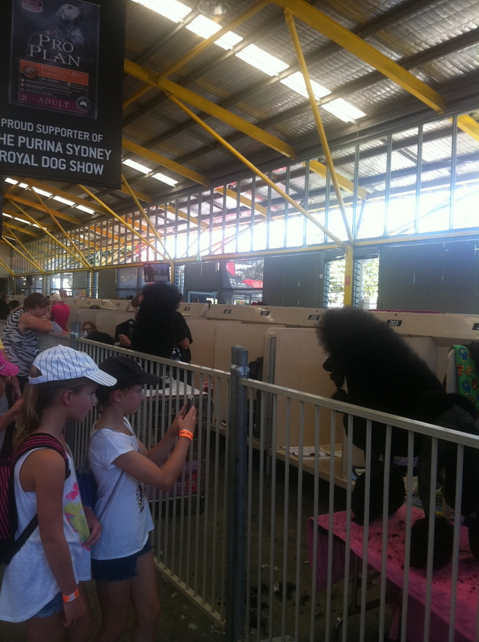 sydney royal easter show, animal walk, kids
