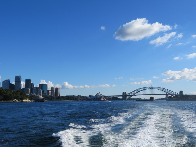 Whale Tail   - Whale Watching Sydney