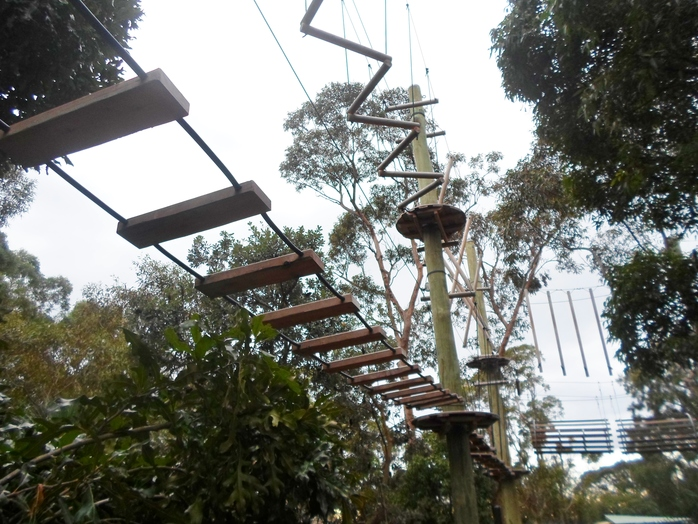 wild ropes taronga zoo, taronga zoo ropes course, high ropes sydney, ropes course sydney, taronga things to do, kids activities sydney